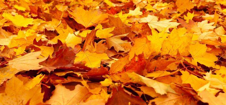 Najava akcije: Jesenja poklon akcija iznenađenja!