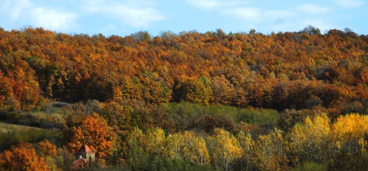 Najava akcije: Jesen na Radovanjskim brdima